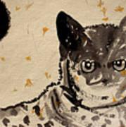 Cat 3 Art Print