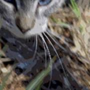Cat A Hunting Art Print