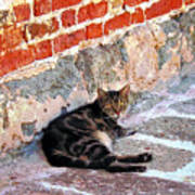 Cat Against Stone Art Print