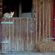 Cat And Barn Art Print