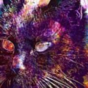 Cat Black View Close  Art Print