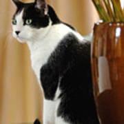 Cat Contimplation Art Print