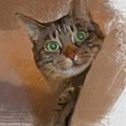 Cat Desire. Art Print