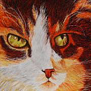 Cat Eye Art Print by Shahid Muqaddim