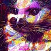 Cat Head Face Macro Close Up  Art Print