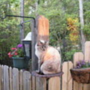 Cat In A Birdbath Art Print