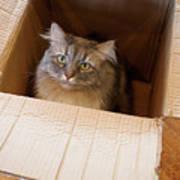 Cat In A Box Art Print
