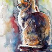 Cat In Backlight Art Print