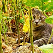Cat In Field Art Print