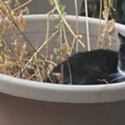 Cat In Flower Pot. Art Print