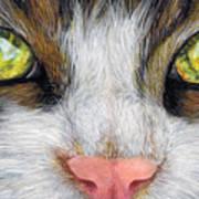 Cat In Pastel Art Print