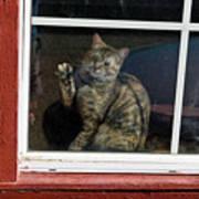 Cat In The Red  Window Art Print