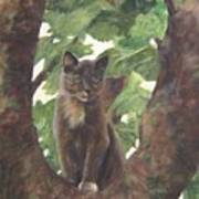 Cat In Tree Art Print