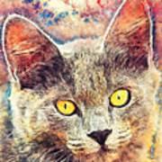 Cat Kiara Art Print