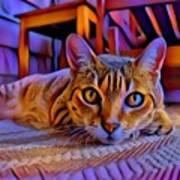 Cat Laying On Braided Rug Art Print