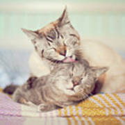 Cat Licking Another Cat Art Print by Viola Tavazzani Photography