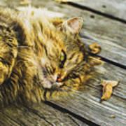 Cat Lie Wood Floor Art Print