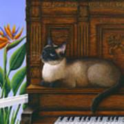 Cat Missy On Piano Art Print