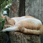 Cat On The Tree Art Print
