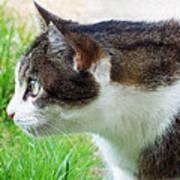 Cat Profile Art Print