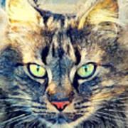 Cat Simba Art Print