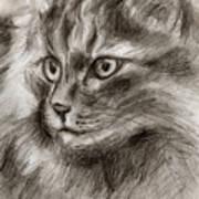 Cat Study Drawing No Two Art Print