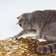 Cat With Coins Art Print