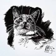 Cat With Ink Art Print