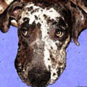 Catahoula Leopard Dog - Soulful Eyes Art Print by Sharon Cummings