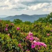 Catawba Rhododendrons Art Print