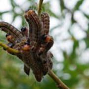 Caterpillar Group Hug Art Print