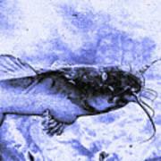 Catfish Blue Art Print