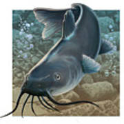 Catfish Print by Valer Ian