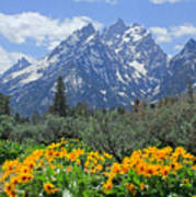 Dm9328-cathedral Group Tetons  Art Print