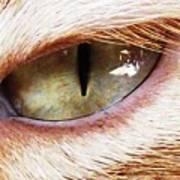 'cats Eye' Art Print