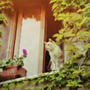Cats Eye View Art Print