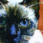 Cats Eyes 13 Art Print