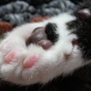 Cats Paw Art Print