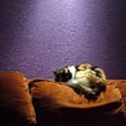 Cats Sleep In Odd Places Art Print