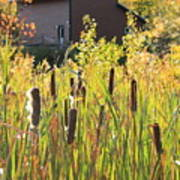 Cattails And Barn Art Print