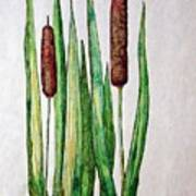 Cattails 2 Art Print