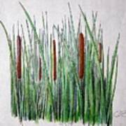 Cattails 3 Art Print