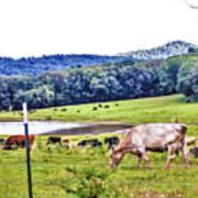 Cattle Farm Art Print