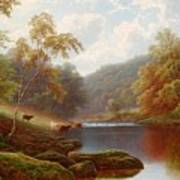 Cattle Watering Along The River Wharfe Art Print