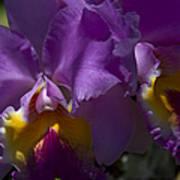 Cattleya Orchid Garden Of Eden Maui Art Print