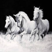 Cavalli Verticali Art Print