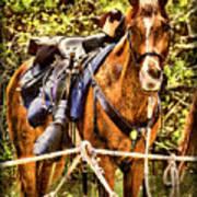 Cavalry Horse Circa 1864 Art Print