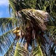 Cayman Palm Art Print