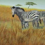 Cebras  In  Rhino  Park Art Print