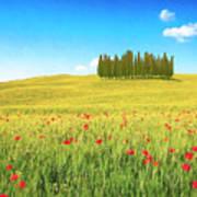 Cedar Grove And Poppies Art Print
